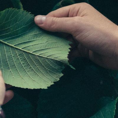 conservation foundation holding leaf