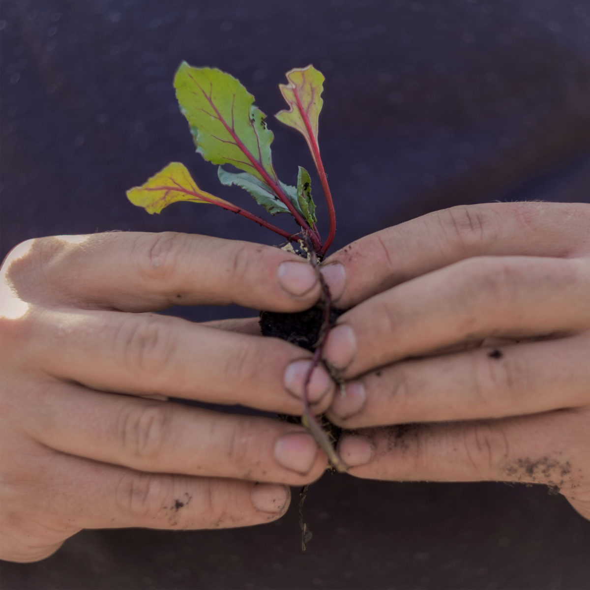 green health fingers gardener plant