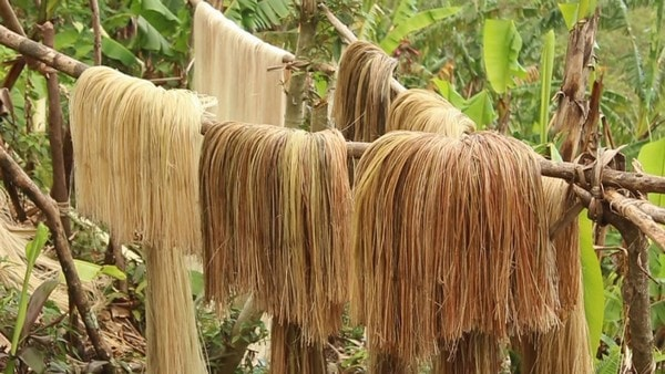 abaca fibre